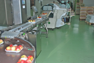 ResiPox OD - Fruitveiling